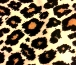 cream black brown leopard